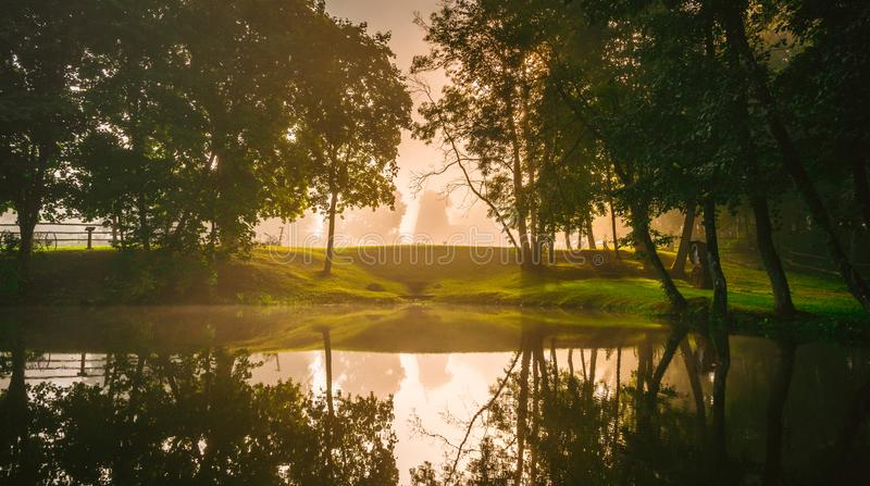 Forest and lake at early morning stock image