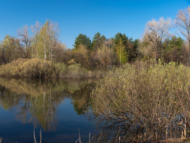 Forest Lake em um dia ensolarado imagem de stock royalty free