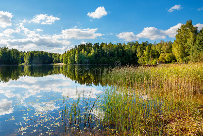 Forest Lake estonia fotografering för bildbyråer