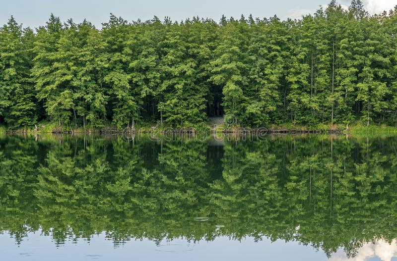Forest lake in the evening, reflected in the water surface of the sky with clouds and trees royalty free stock photography