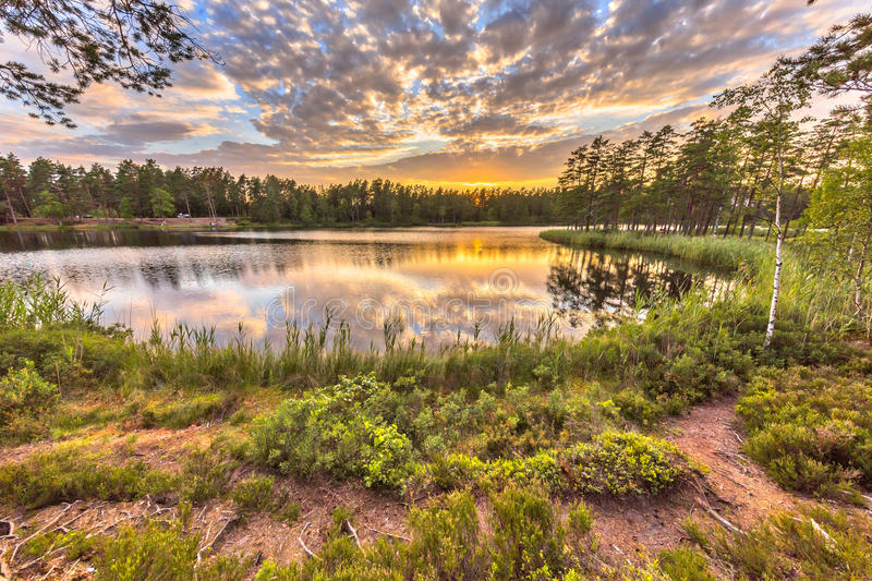 Forest lake in Hokensas Nature reserve. Vastergotland, Sweden royalty free stock image