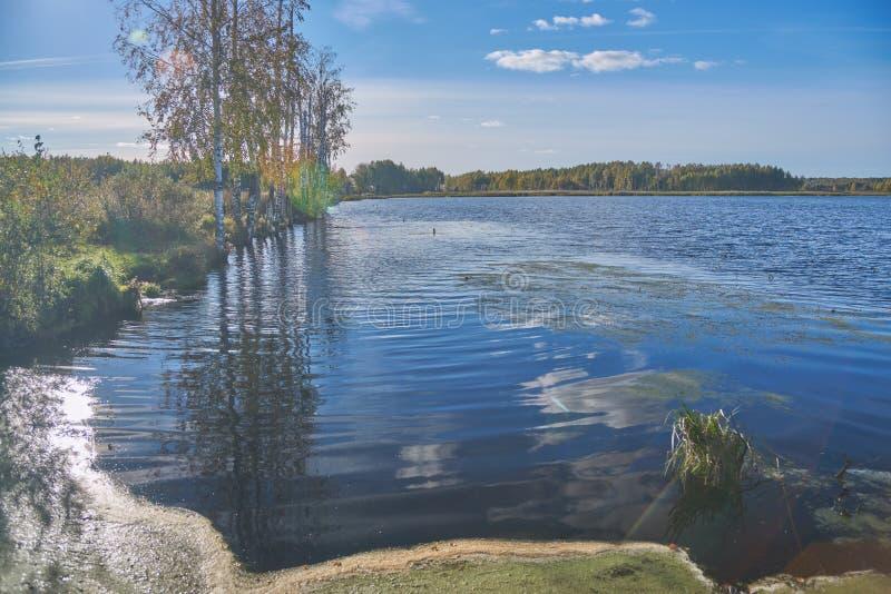 Forest Lake i centrala Ryssland royaltyfria bilder