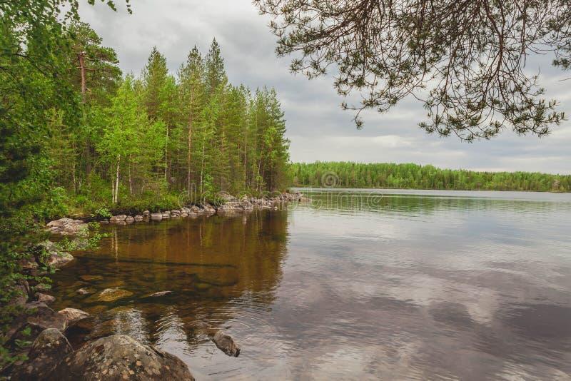 Forest Lake Kust van stenen Mooi landschap stock afbeeldingen