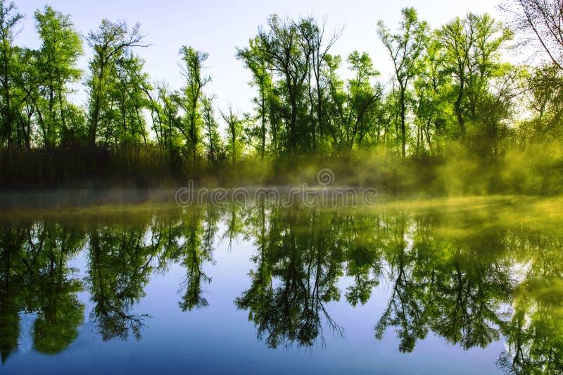 Forest Lake na manhã 01 foto de stock royalty free