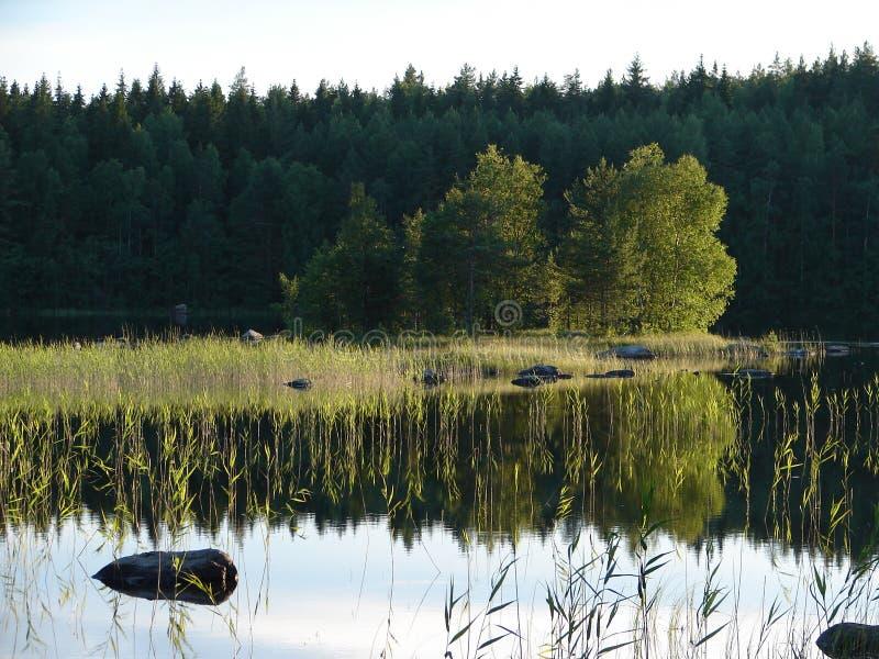 Forest Lake Paisagem com as árvores, refletindo na água imagens de stock