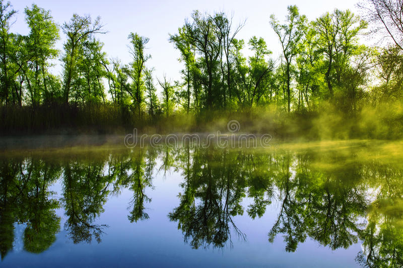 Forest Lake por la mañana 01 foto de archivo libre de regalías