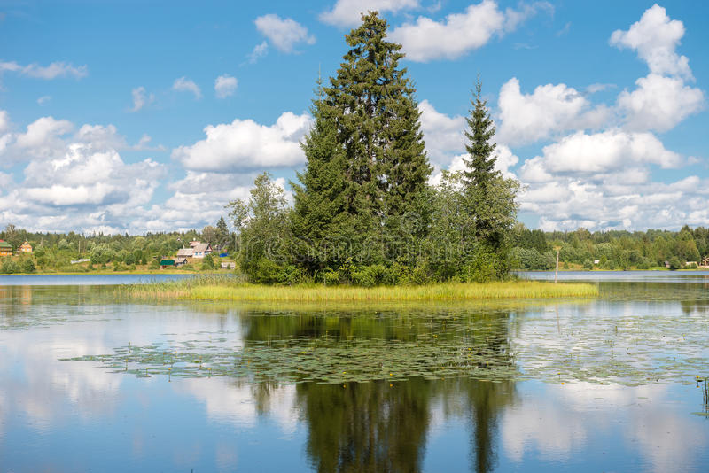 Forest Lake with a spruce on the island stock photography