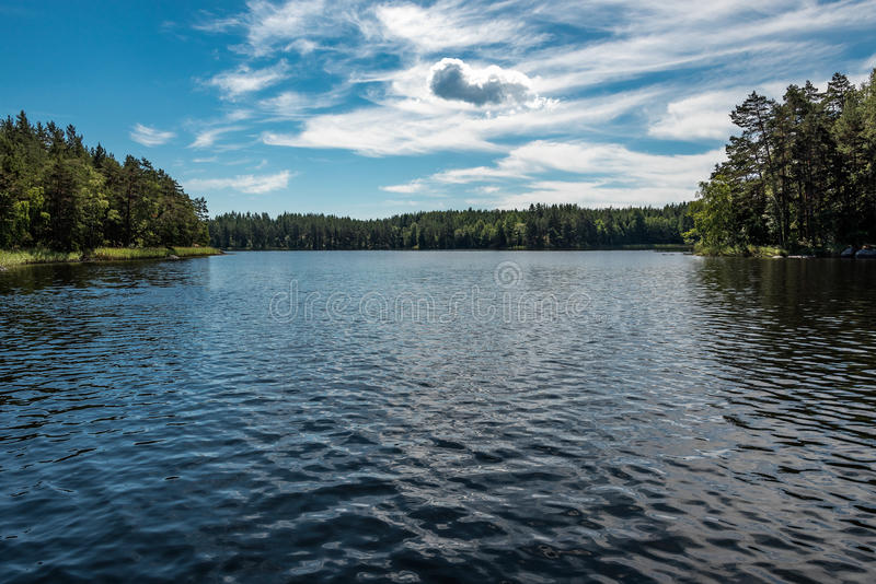 Forest lake in summer stock photography
