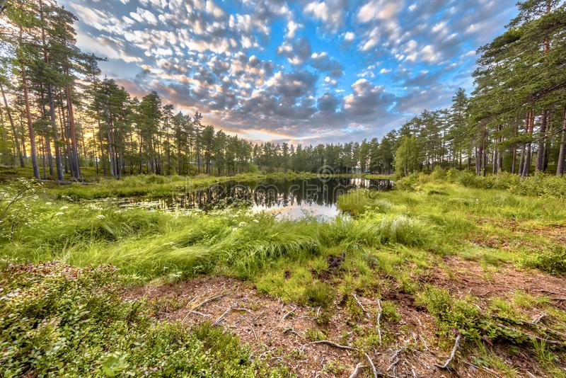 Forest lake surrounded by trees in Hokensas. Forest fen lake in Hokensas Nature reserve, Vastergotland, Sweden royalty free stock photography
