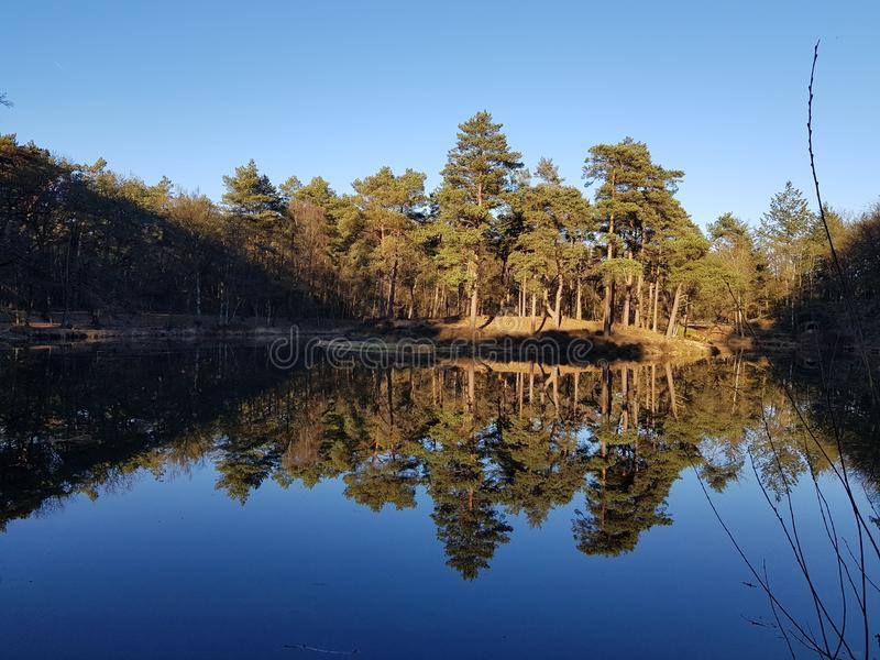 Forest lake in zeist Holland royalty free stock photos