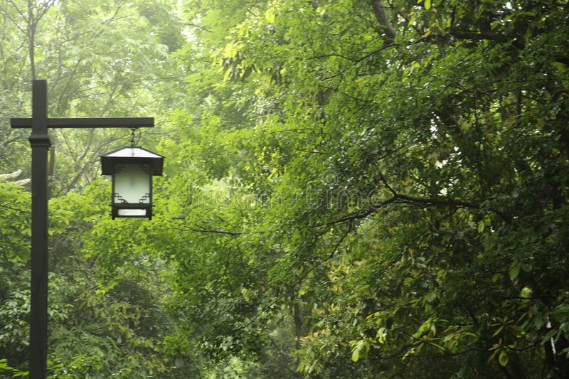 Forest and Lamp in Hangzhou royalty free stock photography
