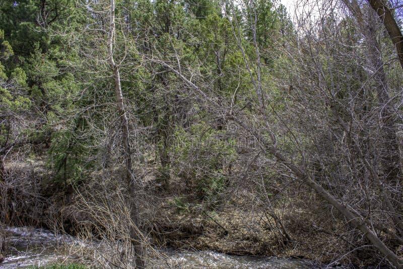 Forest Land grosso fotografia de stock