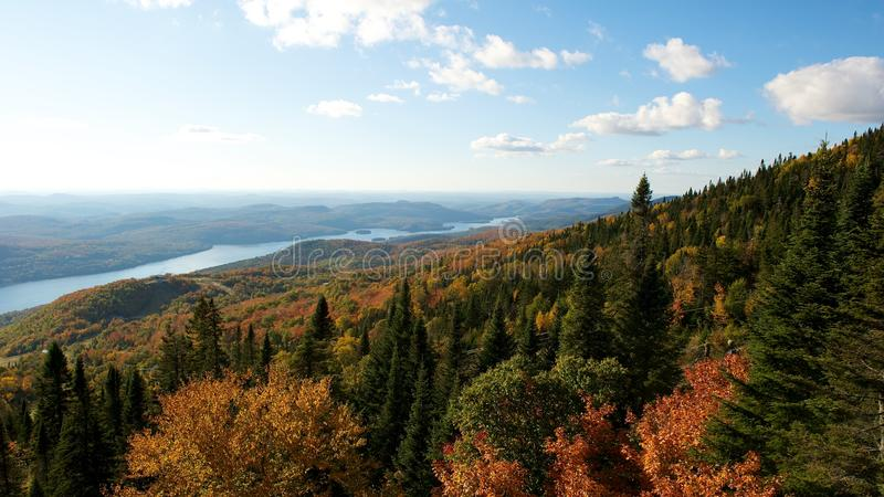 Forest landscape in Autumn stock image