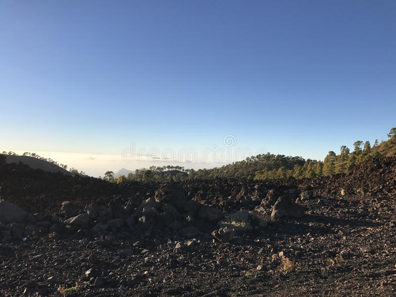 Forest landscape above the clouds. At Teide National Park in Tenerife the Canary Islands royalty free stock photography