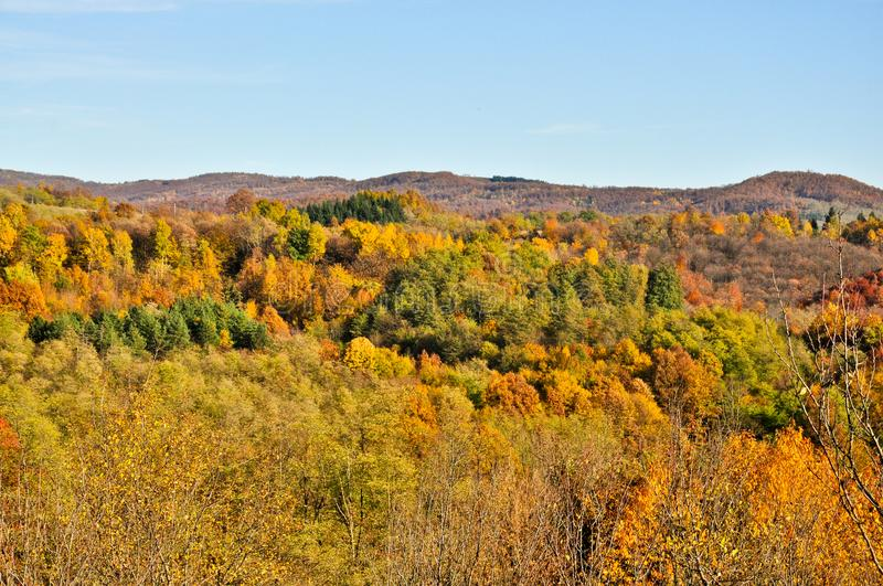 Forest landscape in autum. Colors of mountains forest,walk trough nature, enjoy in autumn stock images