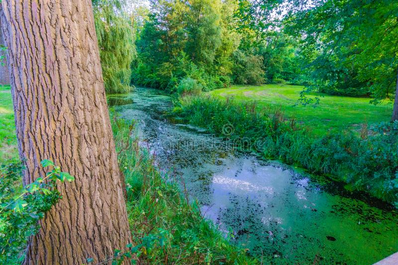Forest landscape background a tree with big river royalty free stock photo