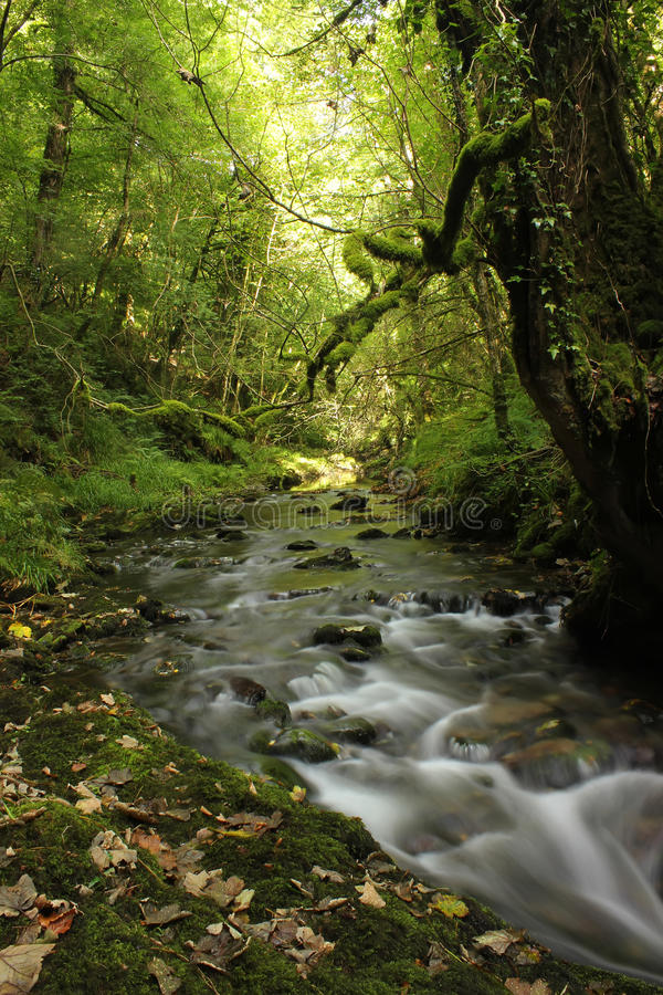 Forest landscape, England royalty free stock photography
