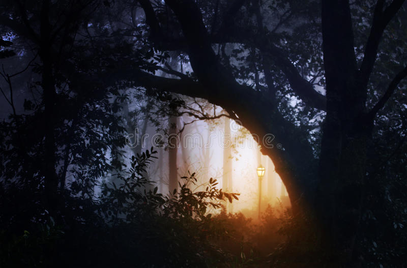 Forest landscape with fog and lantern royalty free stock images