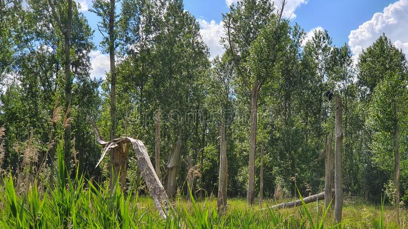 Forest landscape mode with epic crow. Grass, trees, wood, bird, birds, sky, clouds stock photos