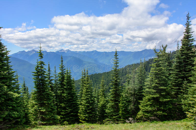 Forest landscape in the mountains, Olympic National Park, Washington, USA. Forest landscape in the mountains, Olympic National Park, Washington royalty free stock image