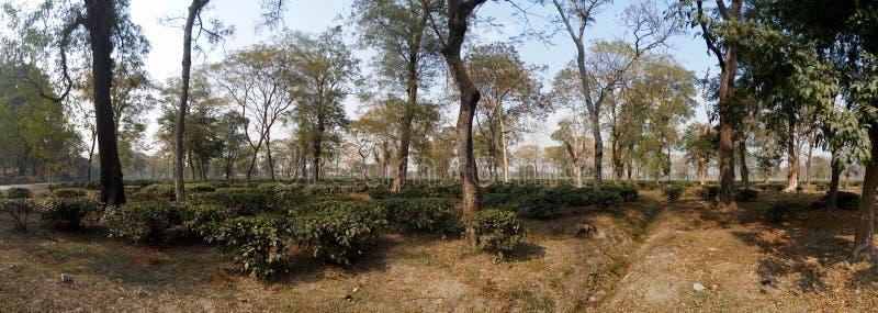 Forest Landscape nel Bengala del nord fotografia stock