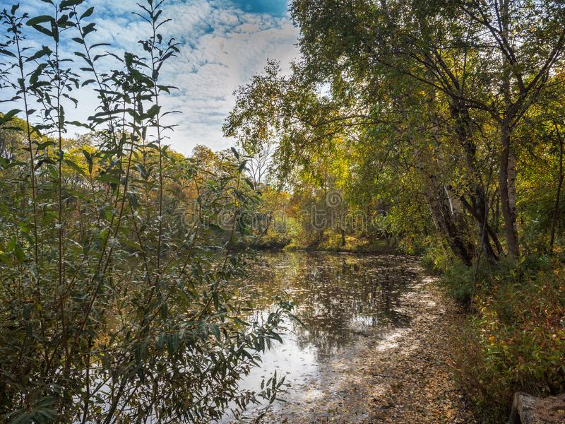 A quiet lake among yellowing trees on a Sunny autumn day stock photography