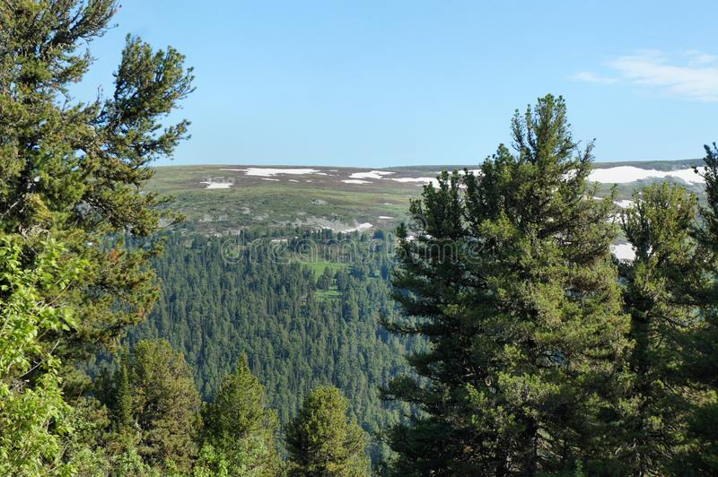 Forest landscape of the Sayan Mountains. Siberia. royalty free stock image