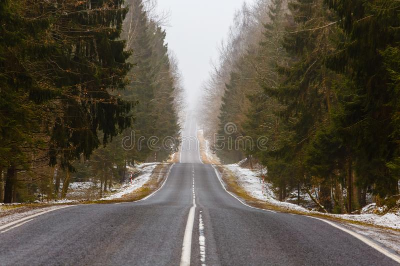 Forest landscape. Straight road along misty forest. Spring scenery royalty free stock image