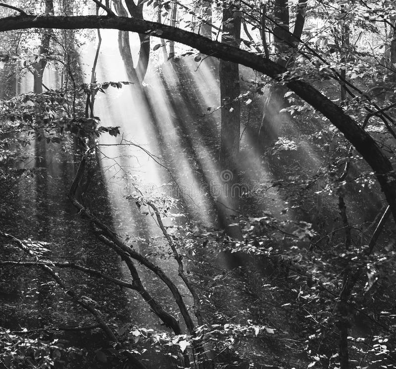 Forest landscape with sun rays in the smoke stock photography