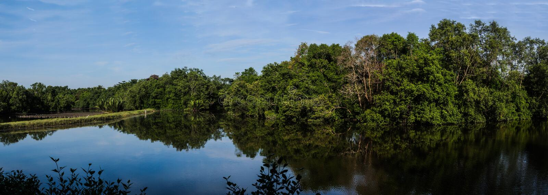 Forest Landscape Sungei Buloh foto de archivo libre de regalías