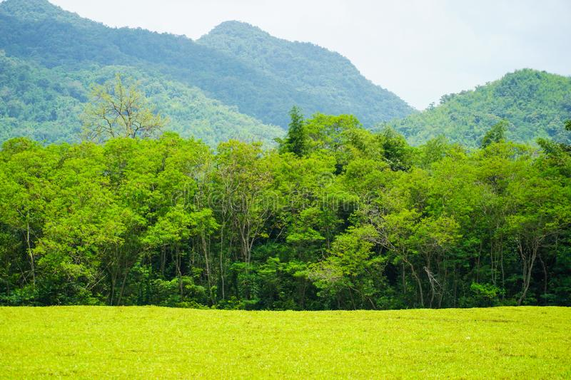 Forest landscape view of mountain under sunlight nature background royalty free stock photography