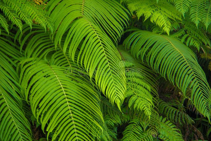 Forest leaves that grow fresh with a strong green color stock photos