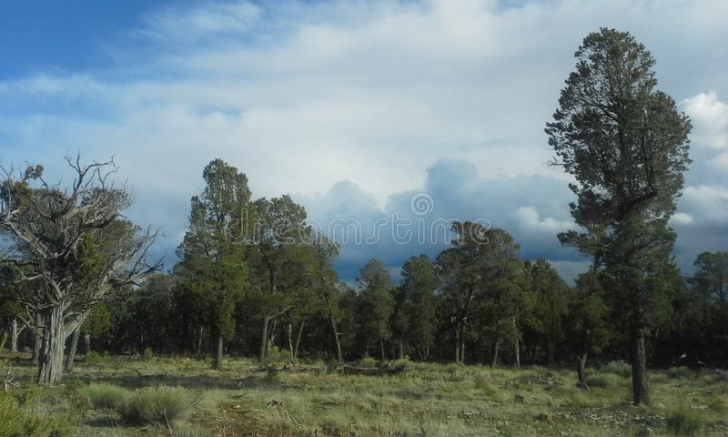 Forest life. A walk in the woods royalty free stock photo