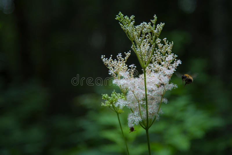 Forest life stock photography