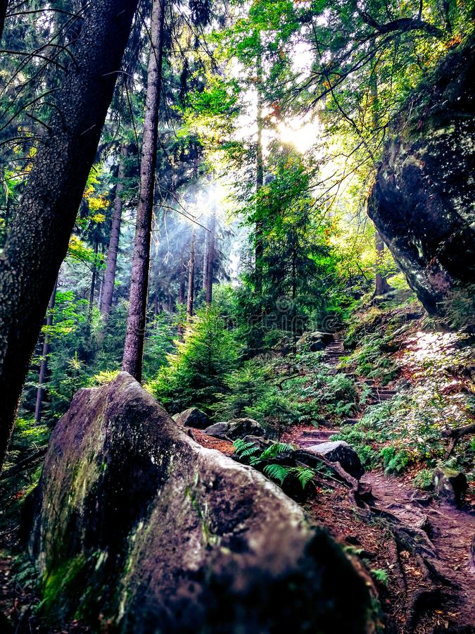 Forest Light photographie stock