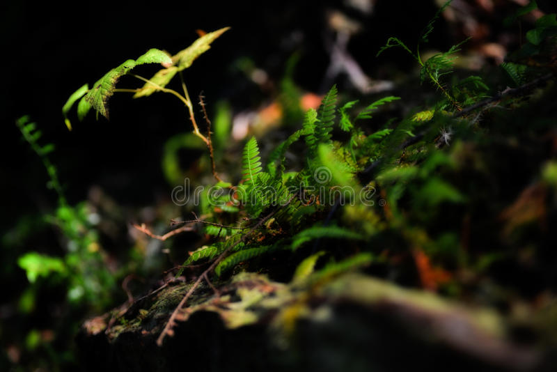 Forest Light photo stock