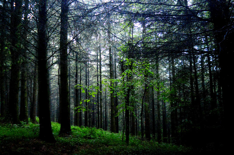 Forest Light fotos de stock royalty free