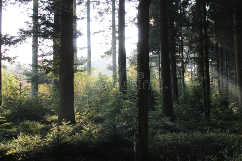Forest Light royalty-vrije stock afbeelding