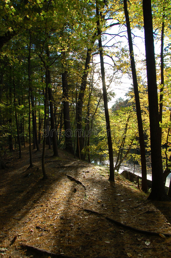 Download Forest Lighting Stock Photo - Image: 1413230