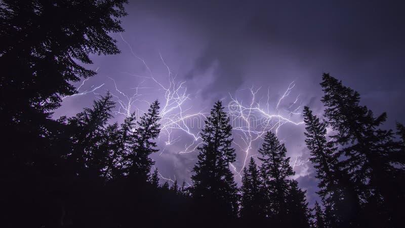 Forest Lightning lizenzfreies stockbild
