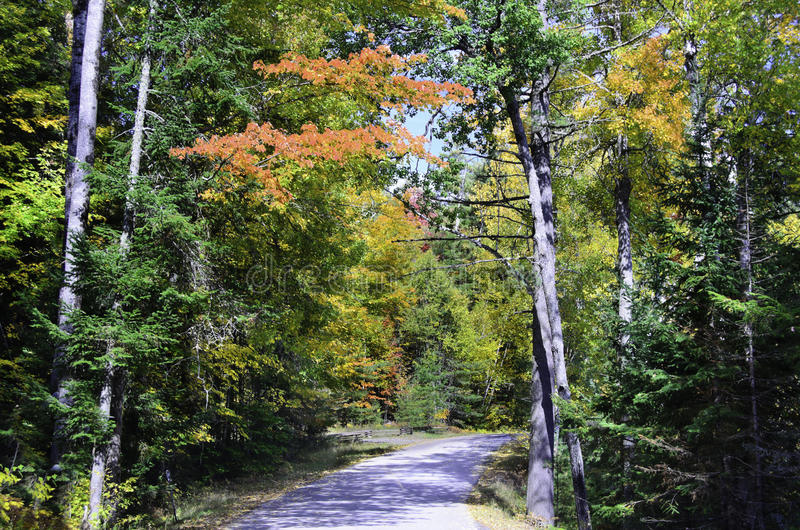 Forest lined road royalty free stock images