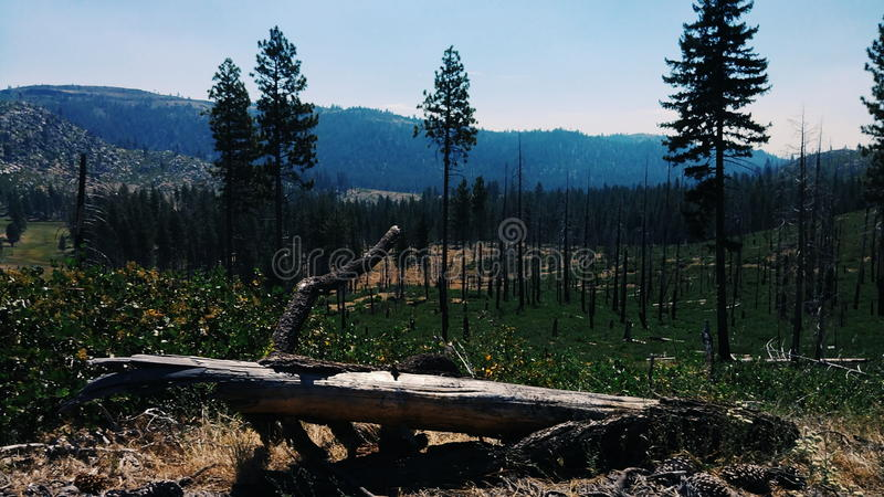 Forest lives on stock image