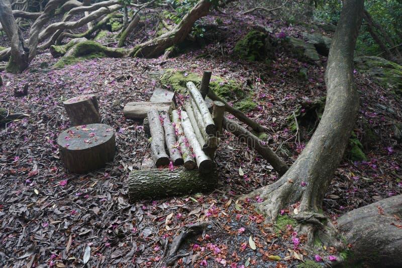 Forest Log Bench royaltyfria foton