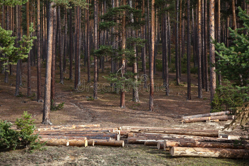 Download Forest Logging stock image. Image of rough, outdoors - 28795613