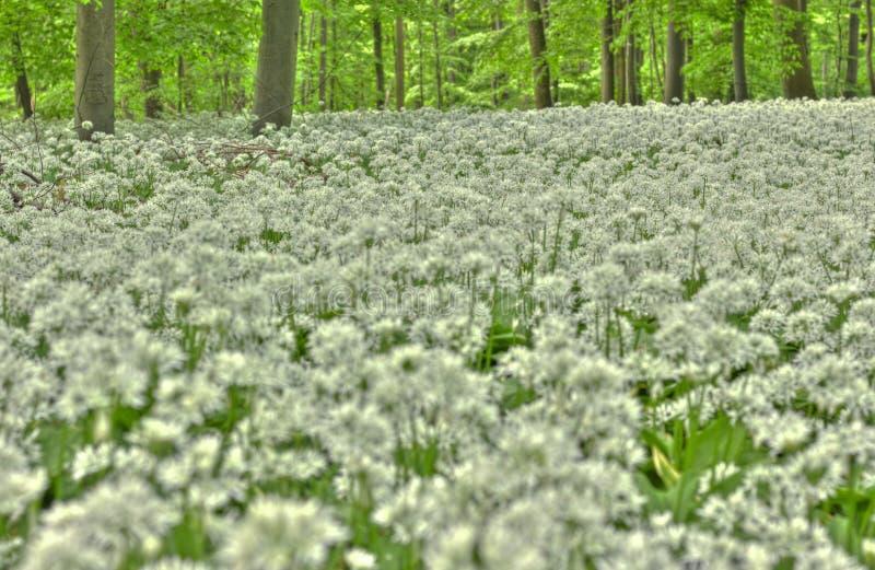Forest In Lower Saxony fotos de archivo libres de regalías
