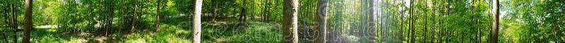 Forest In Lower Saxony immagini stock libere da diritti