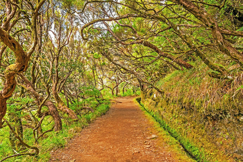 In the forest, Madeira. Irrigation canal levada in magical forest, Madeira Island, Portugal stock image