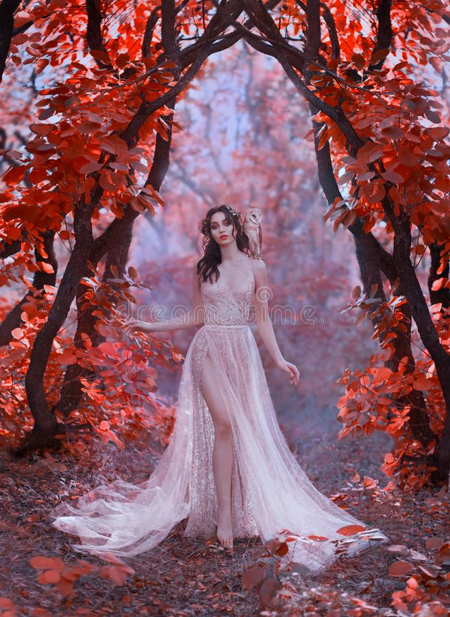 Forest magic sorceress walks the harms of trees with red leaves with her owl royalty free stock image