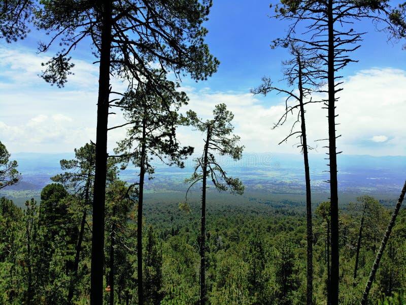 Forest Maliche Mexico stock foto