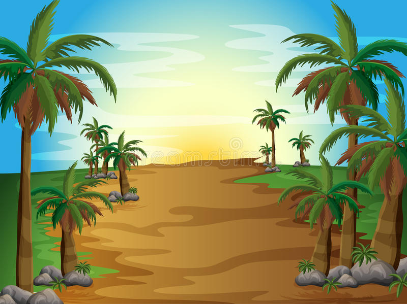 A forest with many palm trees vector illustration